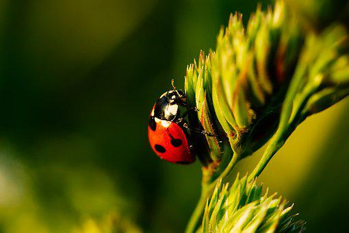 Ladybug, Insect, Beetle, Points, Red, Macro, Nature
