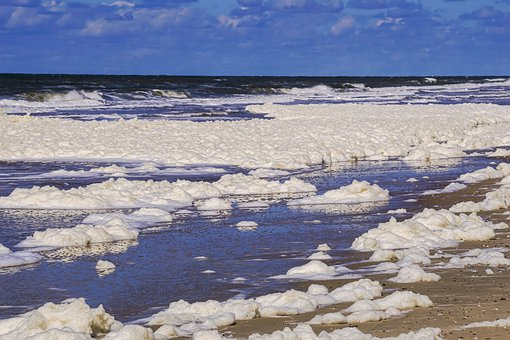 Sea, Beach, Wave, Foam, Foam Alga, Foaming