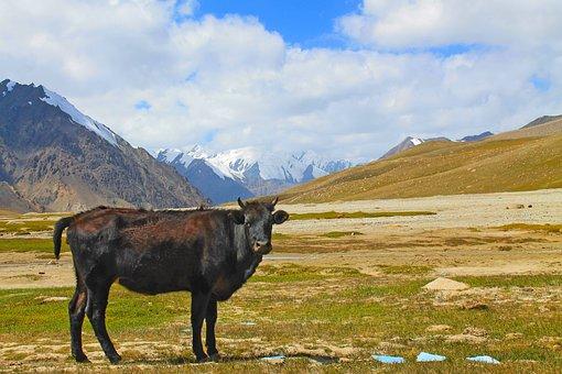 Pakistan, Pass, China, Khunjerab, Border, Snow