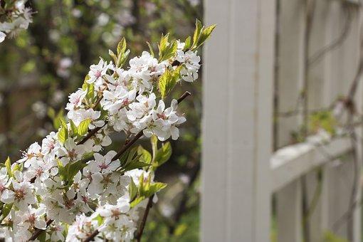 White, Texture, Spring, Season, Row, Plant, Petal