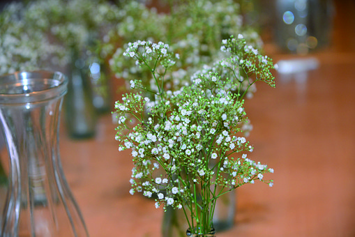 Wedding, Decoration, Flowers, Gypsophila, Festival