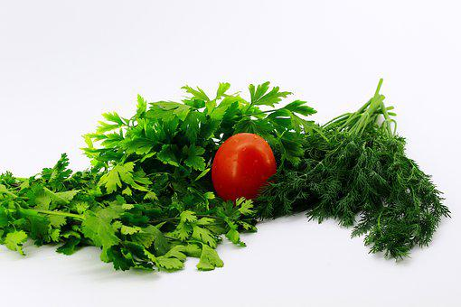 White Background, Greens, Parsley, Dill, Cilantro