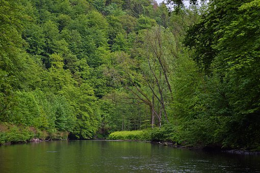 Landscape, River, Nature, Water, Creek, Scenic, Forest