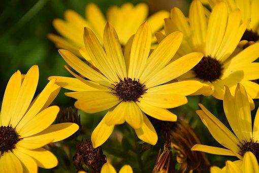 Flower, Yellow Flowers, Petals, Plant