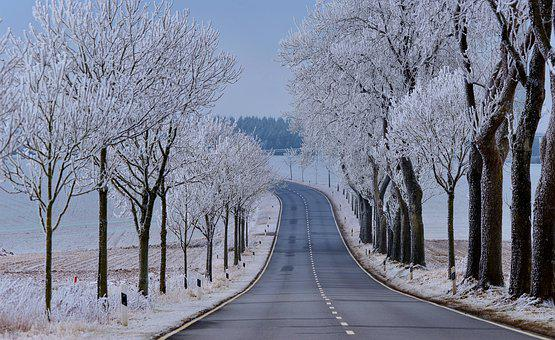 Snowy, Winter, Frost, Cold, Landscape, Wintry, Trees