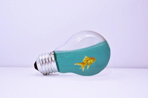 Lamp, Water, Fish, Fishing, Underwater, Sea, Ocean