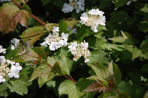 White, Flower, Sheet