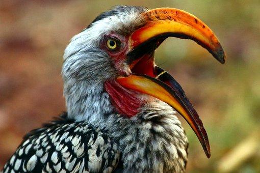 Bird, Safari, Animal World, South Africa, Hornbill