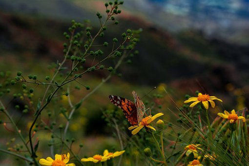 Macro, Butterfly, Nature, Insect, Animal, Butterflies