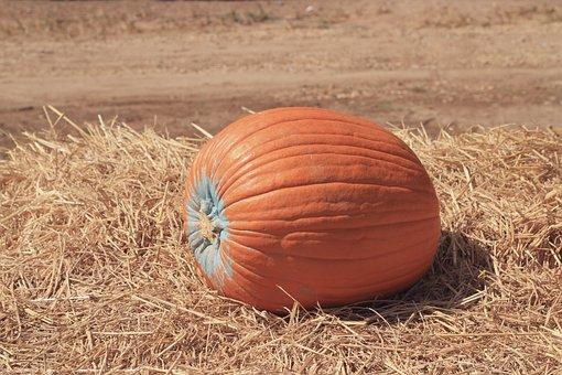 Farm, Festival, Food, Fresh, Gourd, Harvest, Hay