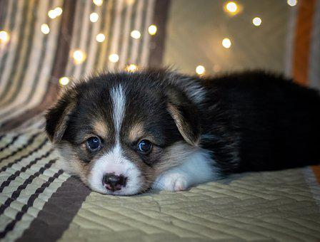 Puppy, Cute, Dog, Funny, Black And White