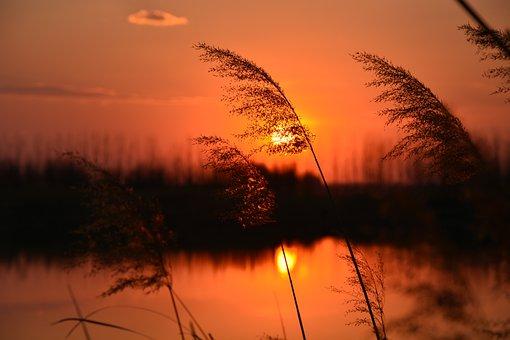 Sunset, Reed, Lake, Cloud