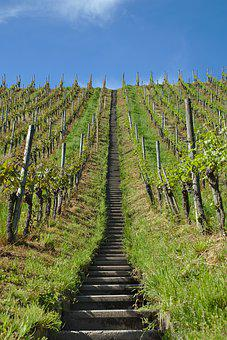 Vineyard, Stairs, Vines, Slope, Agriculture, Hill