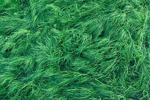 Grass, Green, Background, Meadow, Landscape, Nature