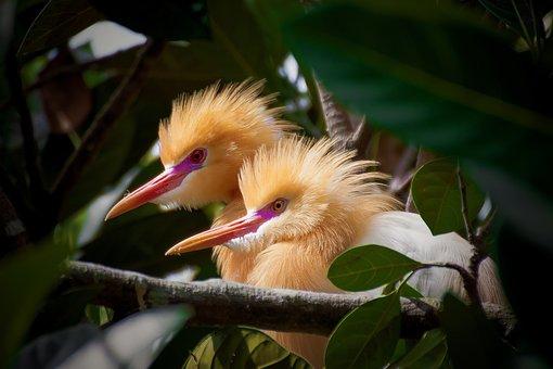 Bird, Petulu, Bali, Island, Indonesia, Travel, Vacation