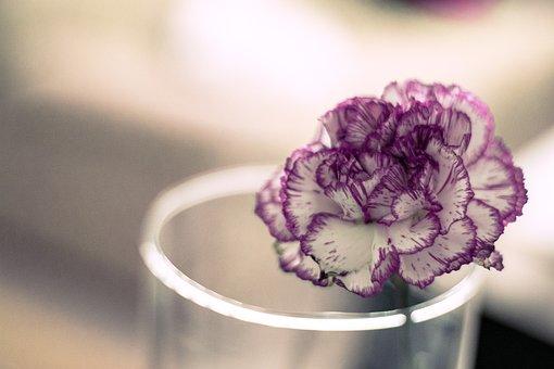 Flower, Bokeh, Plant, Flora, Rosa, Nature, Spring