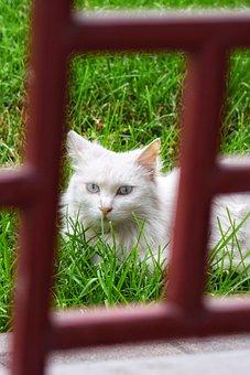Cat, Summer, Serenity, Courtyard, Landscape, Animal