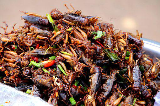 Cockroaches, Salad, Chili, Spring Onions, Cambodia