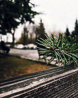 Tree, Nature, Christmas Tree, Spruce, Branch