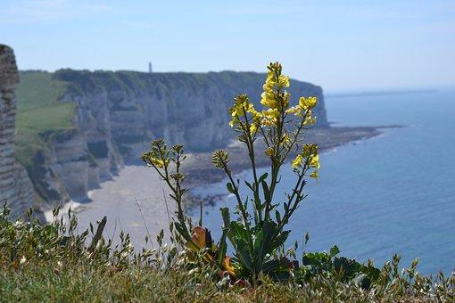 Normandy, Cliffs, France, Sea, Etretat, Beach