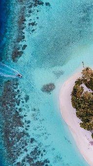 Ocean, Sea, Fish, Island, Coco, Nature, Beautifull