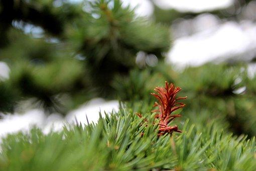 Cedars, Outing, Nature, Enjoy, Lebanon, Landscape