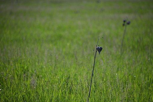 Field, Grassland, Green, Countryside, Meadow, Scenic