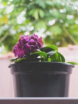 Purple, Flower, Nature, Flores, Flora, Flor, Plant