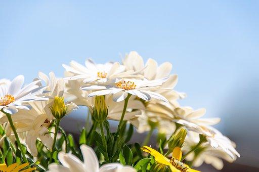 Flowers, White, Spring, Summer, Flourishing, Nature