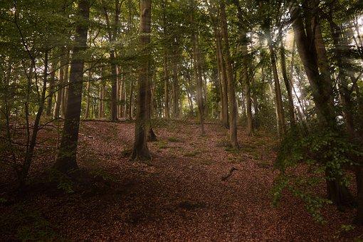 Forest, Trees, Nature, Landscape, Secret, Light