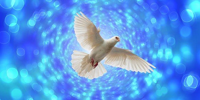 Dove, Flight, Flying, Bokeh, Pentecost, Wing, Freedom
