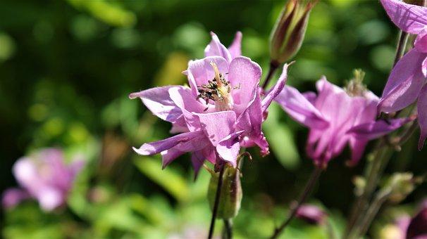 Flower, Lilac, Nature, Flowers, Garden, Vegetable