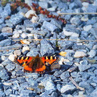 Butterfly, Pebble, Nature, Gravel, Insect
