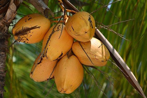 Coconuts, Nature, Tropical, Exotic, Coconut Milk