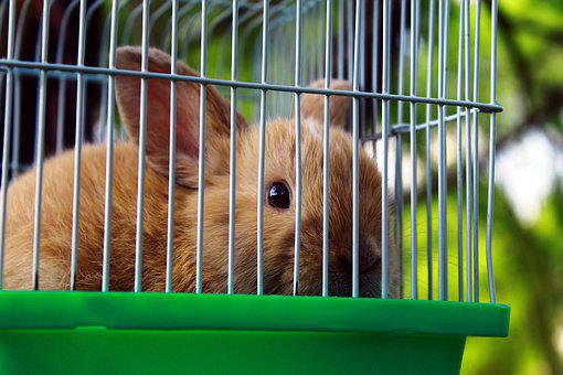 Rabbit, Domestic, Animals, Caged, Outdoors