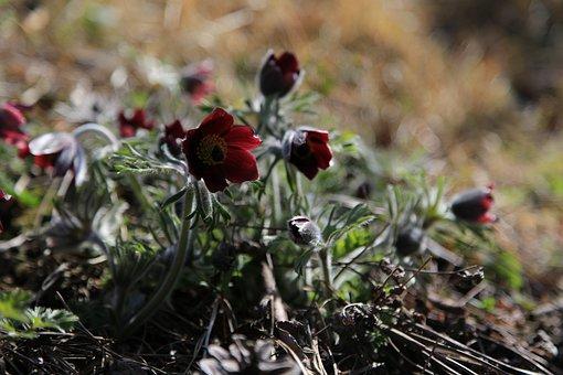 Do Mi Flower, Flowers, Wildflower, Nature, Plants