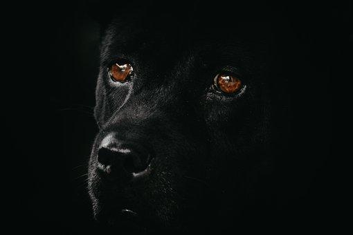 Dog, Black, Animal, Pet, Portrait, Cute, Doggy, Puppy