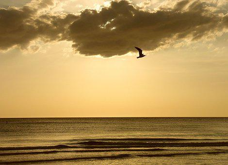 Solo Flight By A Seagull At Sunset, Sunset On The Gulf
