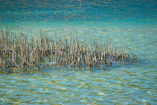 Water, Lake, Blue, Reed, Reflection, Stones, Nature