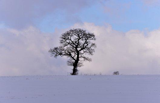 Snow Landscape, Winter, Tree, Snowy, Vote, Heaven