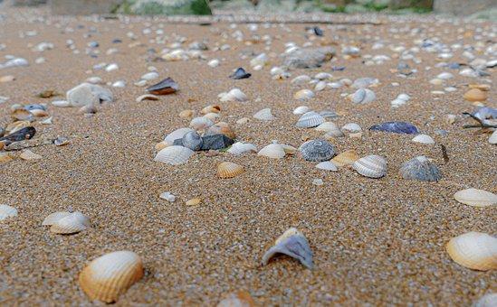 Shell, Sea, Beach, Seashell, Ocean, Nature, Sand, Fish