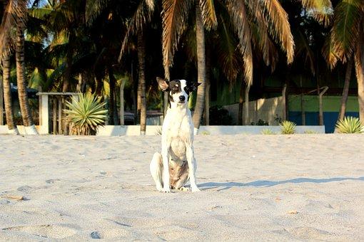 Beach, Dog, Palm, Sand, Animal, Pet, Canine, Puppy