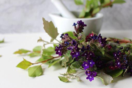 Medicinal Flower, Cure, Ointment, Cream, Spa, Wellness