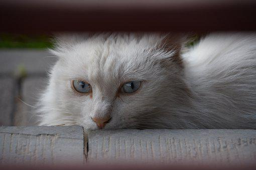 Cat, Cute, Summer, Serenity, Animal, Natural, Colorful