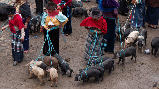 Ecuador, Guamote, Animal Market, Piglet, Indios