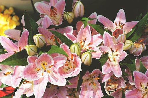 Plant, Nature, Bloom, Blossom, Garden, Flowers, Flora