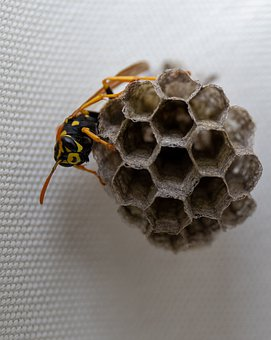 Wasp, Insect, Nature, Yellow, Flower, Bug, Spring