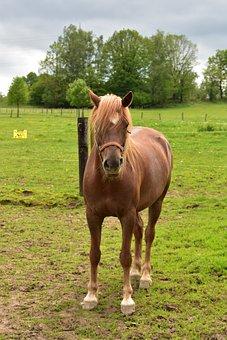 Horse, Animal, Horses, Nature, Animals, Pastures
