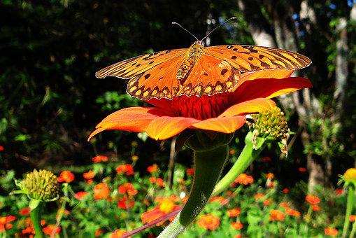 Butterfly, Yellow, Orange, Insect, Nature, Animal