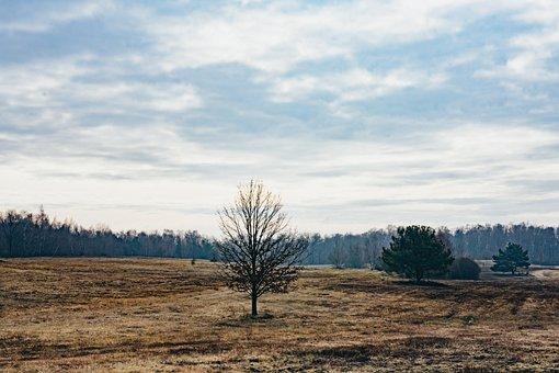 Heide, Tree, Nature, Landscape, Hiking, Forest